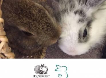 Bunny Lovers es reconocida por la ong estadounidense House Rabbit Society