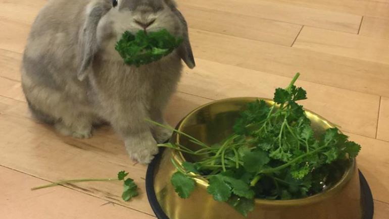 Alimentación de un conejo doméstico