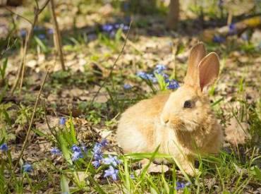 Conoce todo sobre la Terapia Floral para conejitos